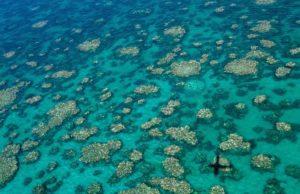 barriera corallina squalo