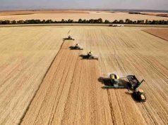 Bayer Condannata Roundup grano tumore giardiniere