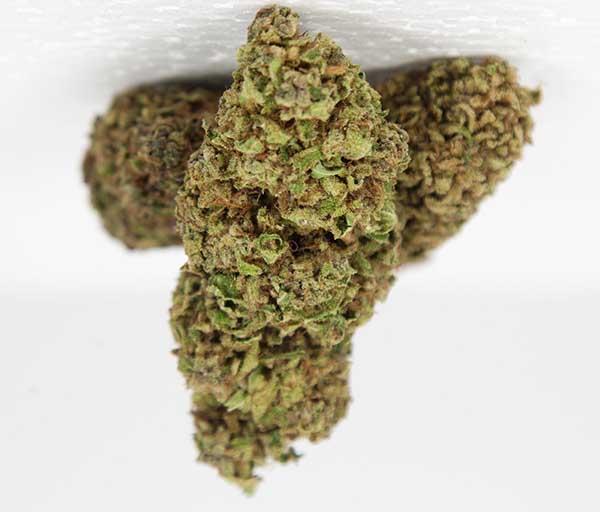 Canapa sativa cannabis light