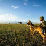 I bracconieri di avorio hanno i giorni contati: ecco l'arma segreta per sconfiggerli