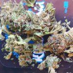 Cannabis legale in Italia: dal Ministero via libera alla Marijuana Light