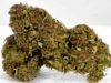 cannabis legale USA trump