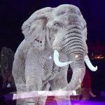 In Germania c'è il circo senza animali, ma con gli animali: un video mostra come