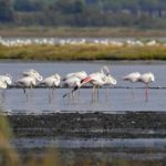 In Maremma svendono la riserva naturale Diaccia Botrona: «I cittadini possono fare offerte ma il bando è troppo breve»