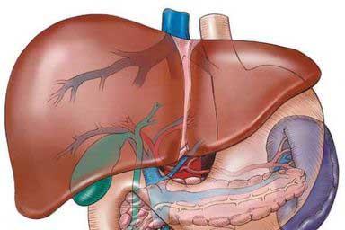 fegato ingrossato
