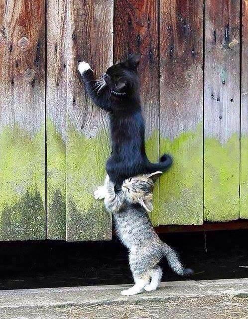 perchè i gatti fanno le fusa