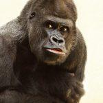 """Gli scienziati avvertono: """"In arrivo estinzione di massa tra mammiferi e primati"""""""