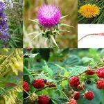 Come bilanciare i livelli ormonali e ridurre la depressione grazie a queste piante