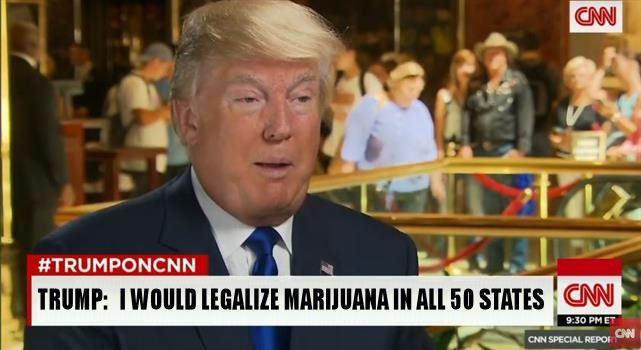 Trump cannabis