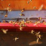 Conseguenze del riscaldamento globale: è la fine per gli insetti impollinatori