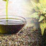 Olio di canapa: proprietà benefiche per ossa e cuore