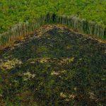 Olio di palma fa male alla salute e all'ambiente: ecco i nomi delle aziende responsabili