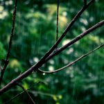 Perché ci piace così tanto il profumo di pioggia? E da cosa è causato?
