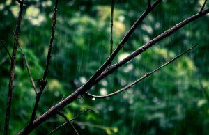 profumo di pioggia