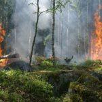 Prevenzione incendi: 5 azioni indispensabili per salvare i nostri boschi