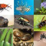 Più di 3mila le specie aliene in Italia: lo rivelano ISPRA e Ministero Ambiente